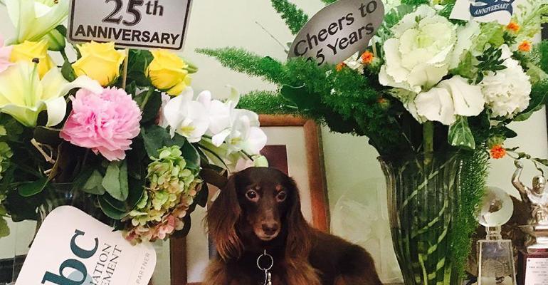 Pet dog from BBC DMC