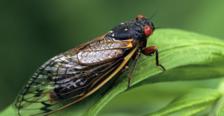 Cicada_Long_2020.jpg